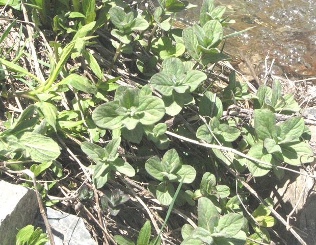 عکس گلهای کوهی